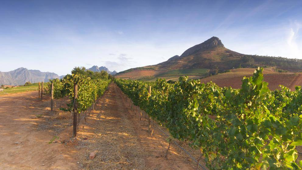 Private Luxury Travel Wine South Africa