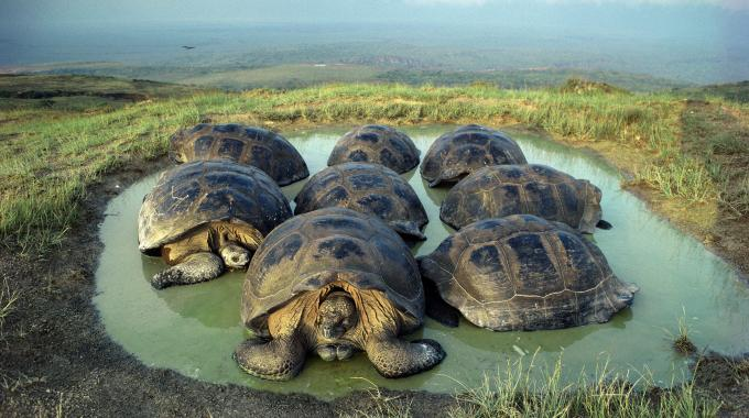 7 incredible facts about the galápagos islands