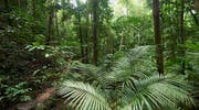 Mossman Gorge Daintree Forest
