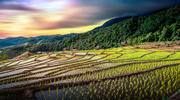 Chiang Mai Thailand rice fields