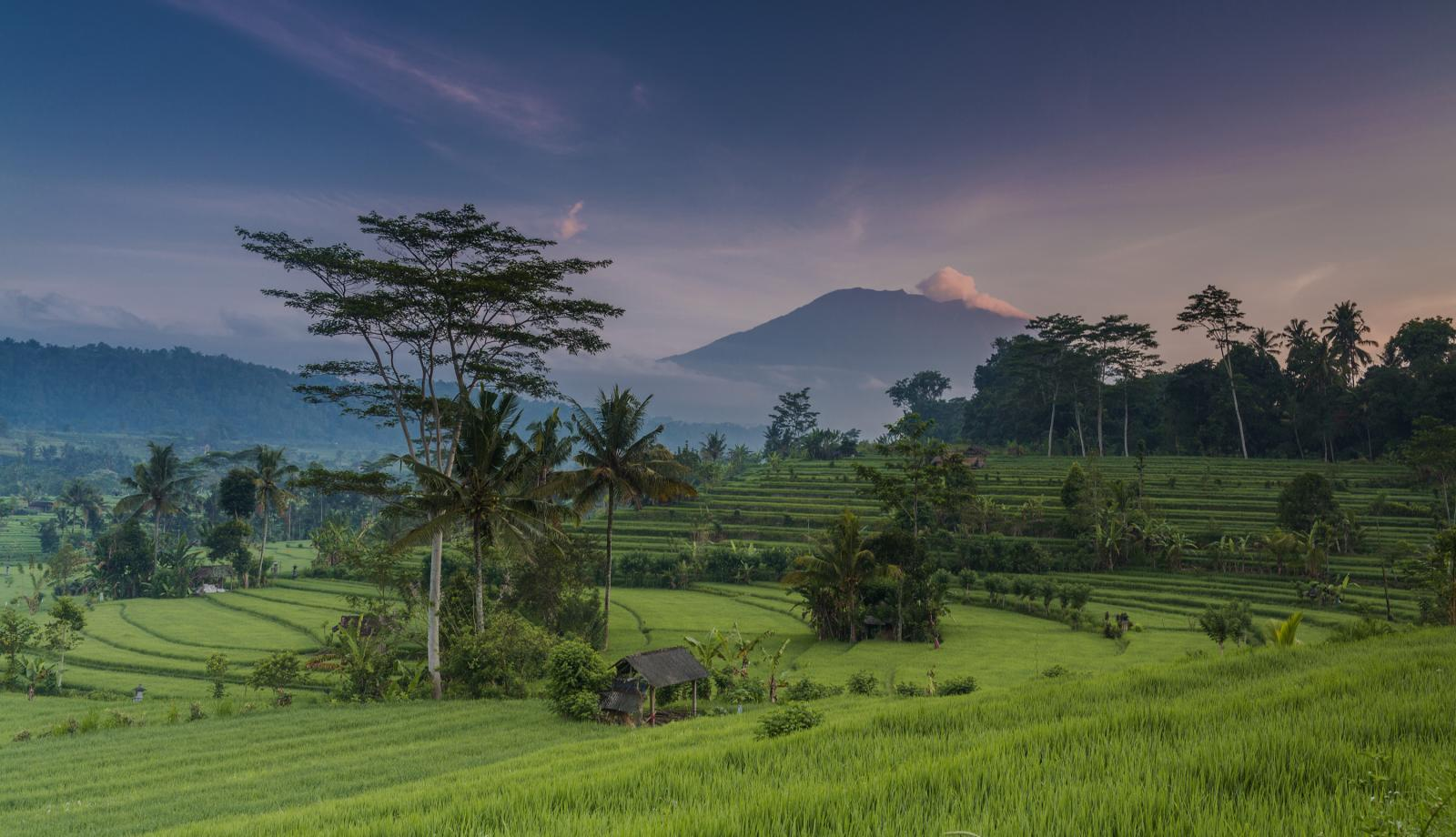 bali, rice fields-hero